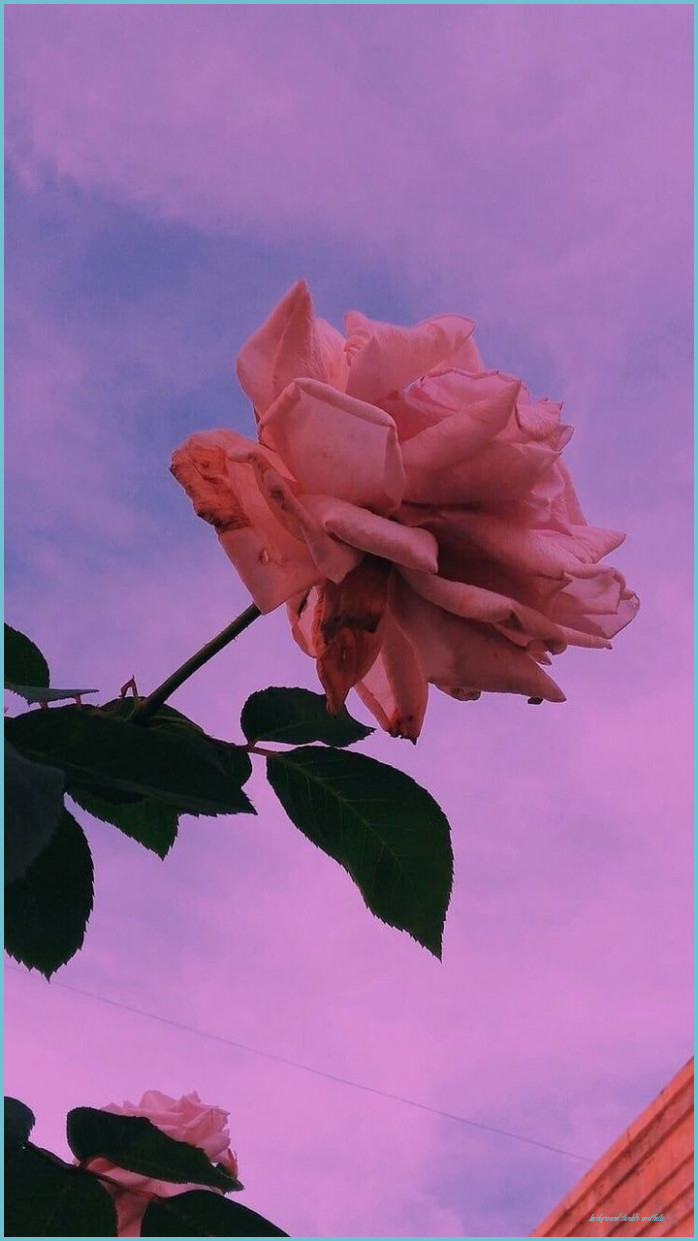 flower aesthetic sky flowers background tumblr rose colors background tumblr aesthetic