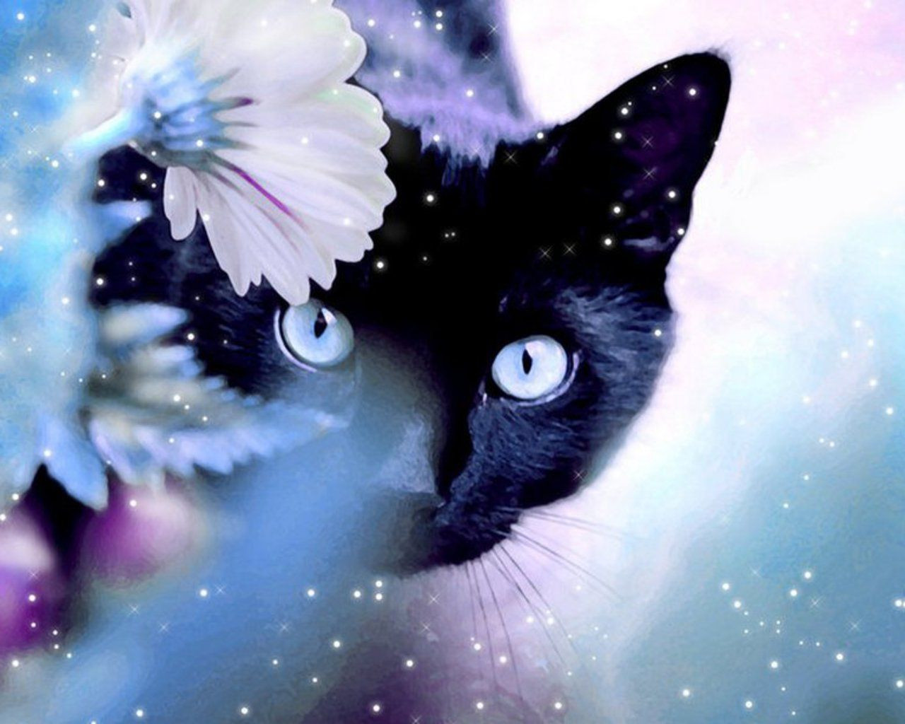 TRhToo 4k ultra cat wallpaper beautiful backgrounds with cats