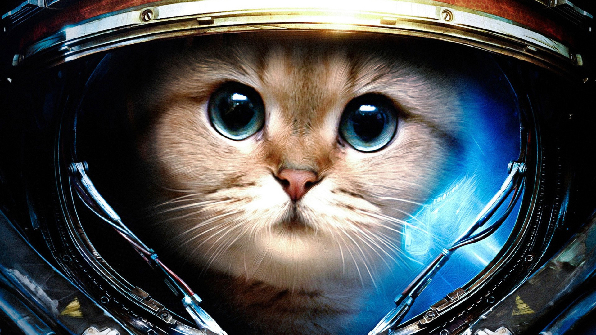 hhxmJb space cat wallpapers background cat