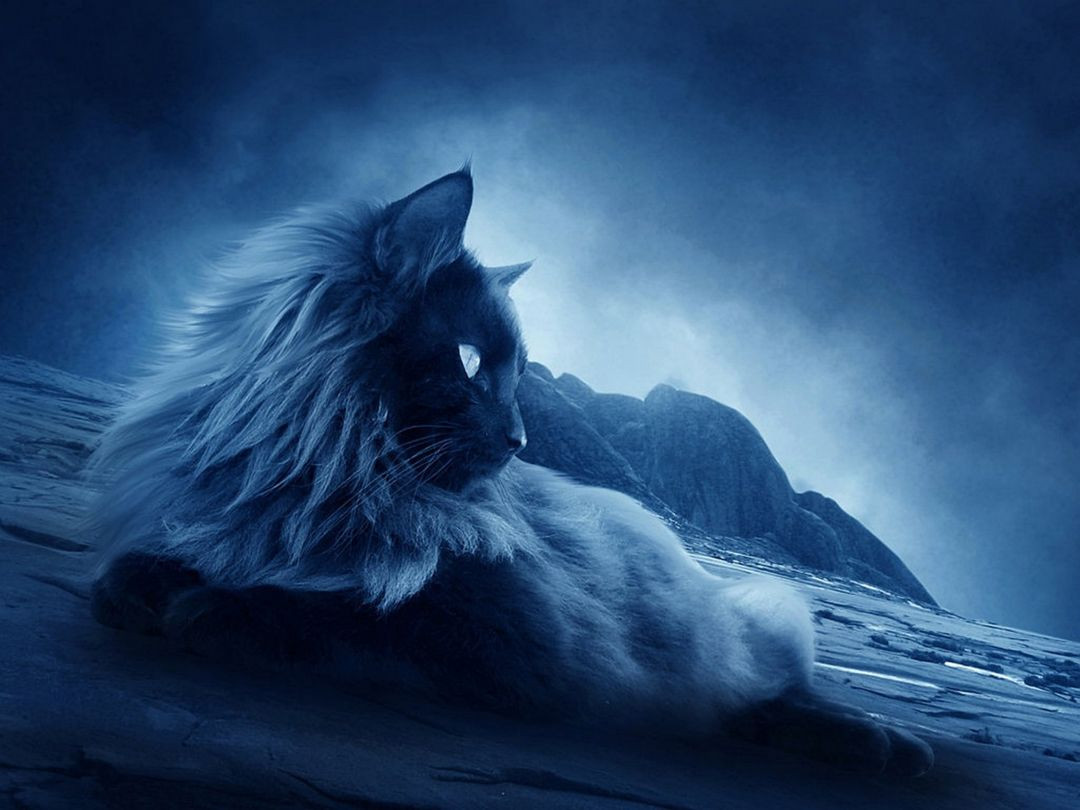 cool catandroid iphone desktop hd backgrounds wallpapers 1080p 4k 8aigj