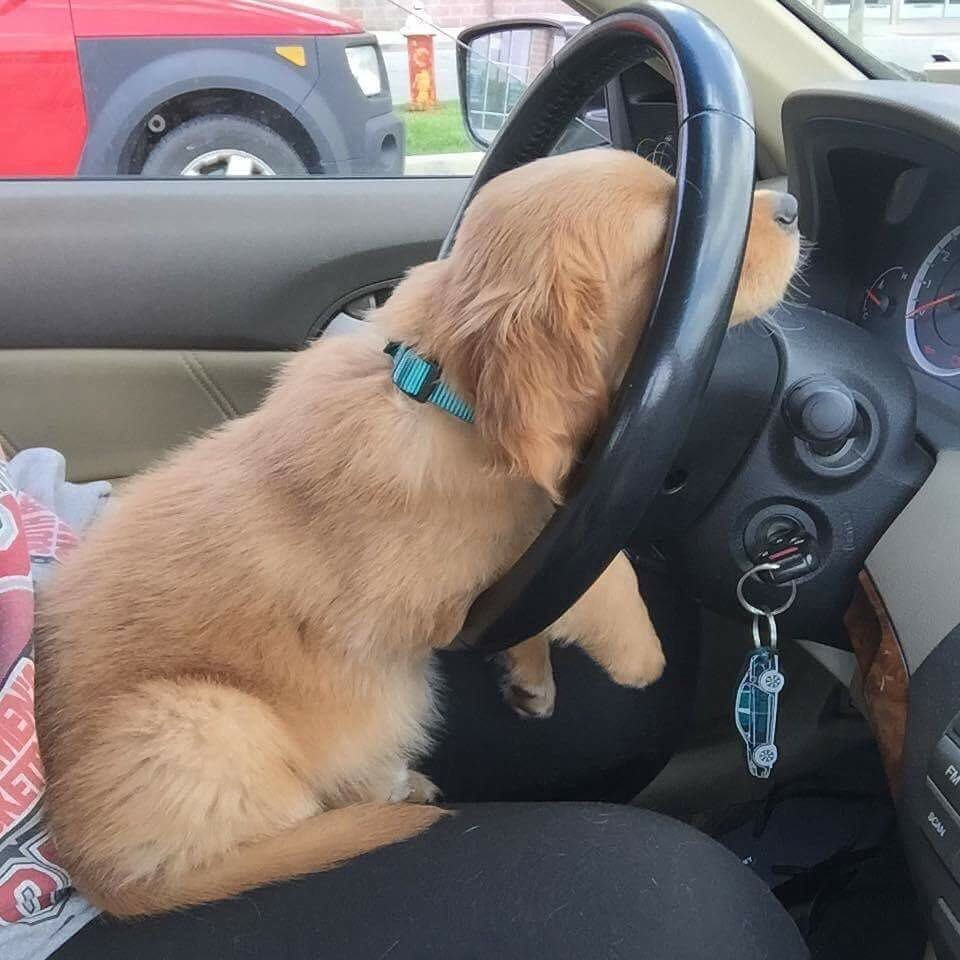 "DogLove on Instagram ""When you re on that 9 5 grind stuck in traffic but you re just a puppy"""