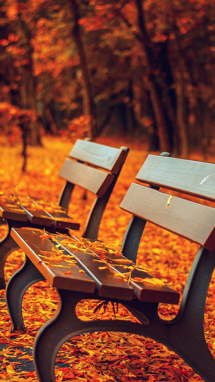 benches in the park covered with orange leaves fall wallpaper for android tall trees in the background with orange leaves