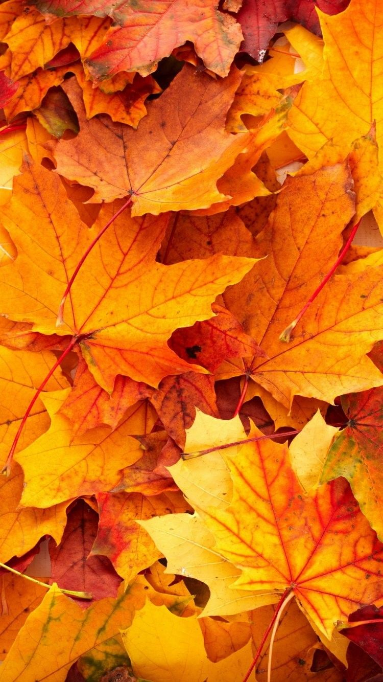 fall iphone 6 wallpapers