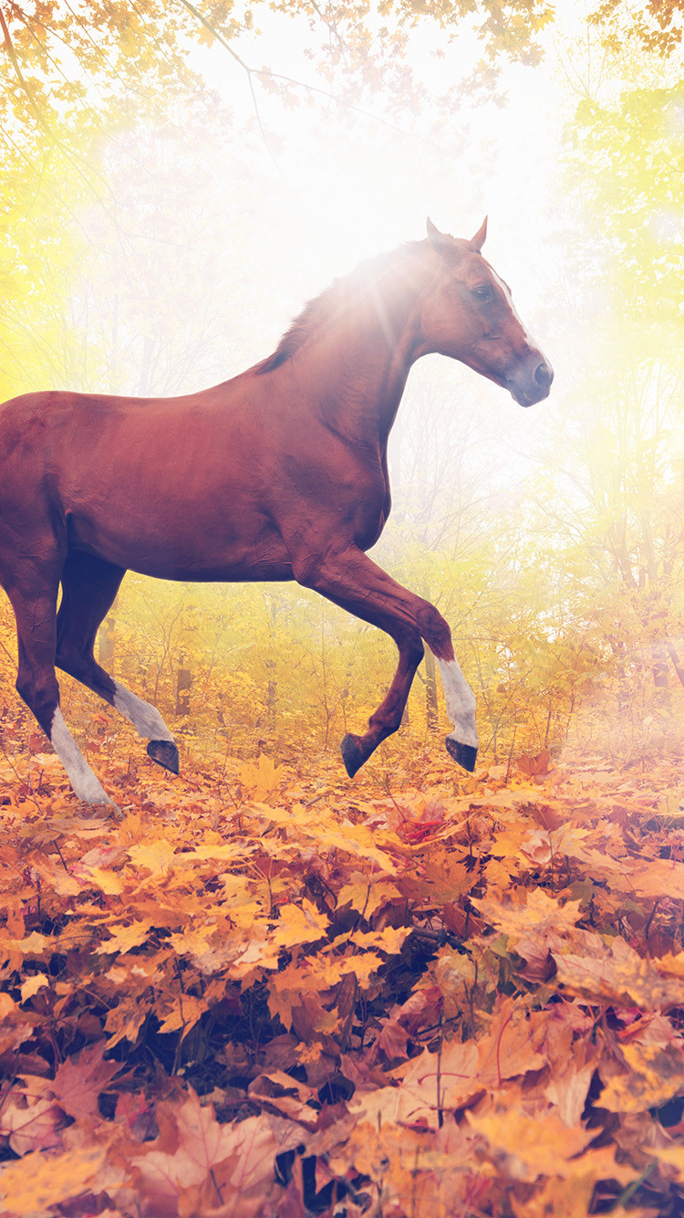 mt31 horse art animal fall leaf mountain red flare