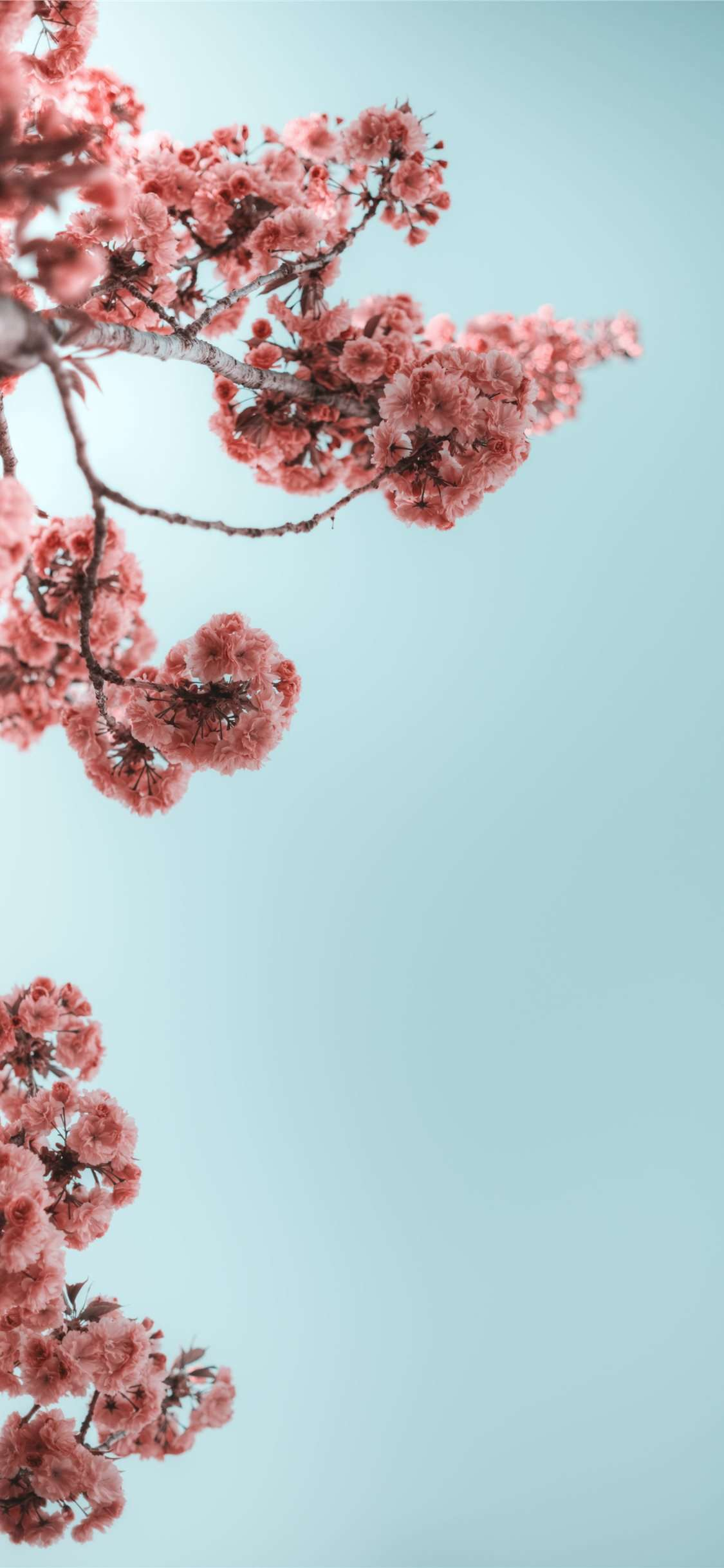 selective photograph of branches with flower iphone 11 wallpaper ilikewallpaper