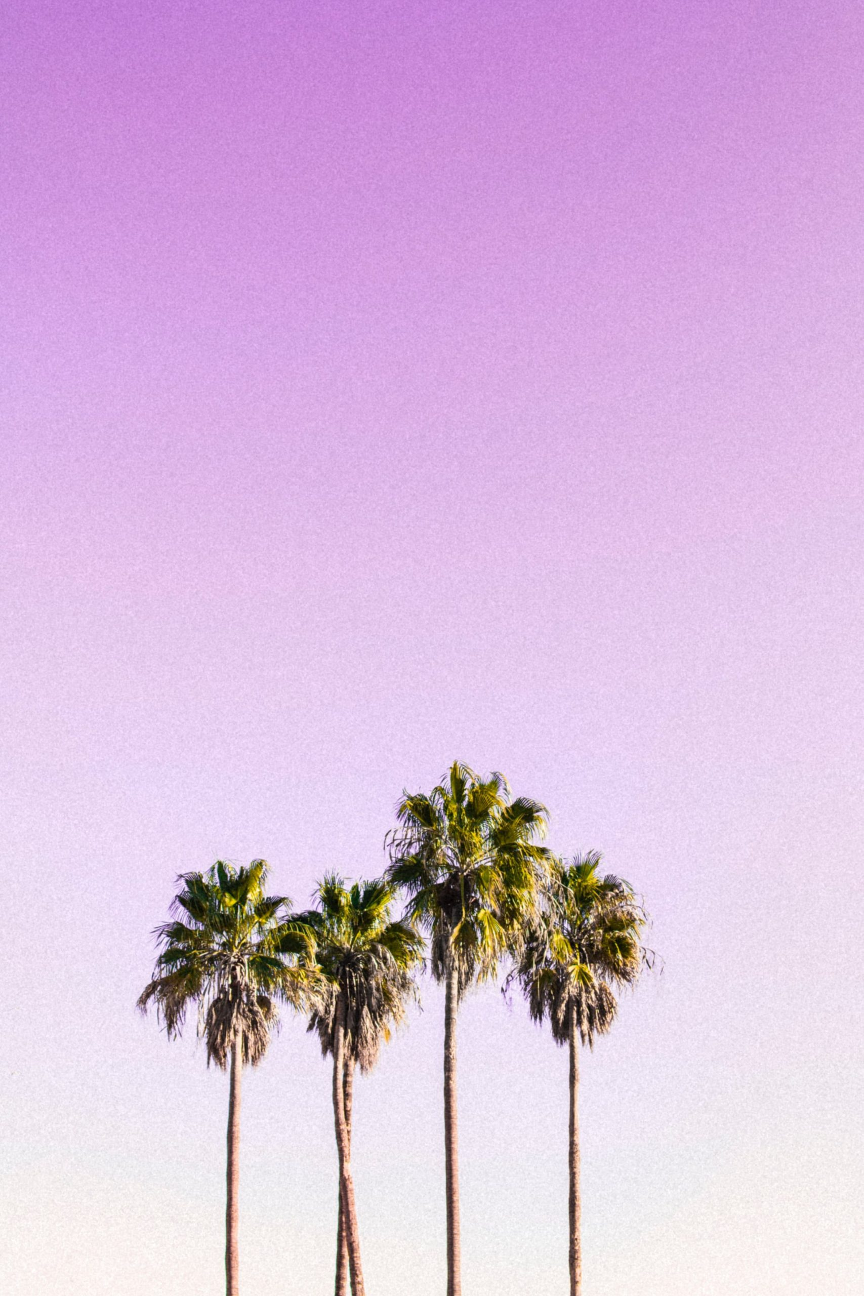 Tropical Pastel iPhone Wallpaper