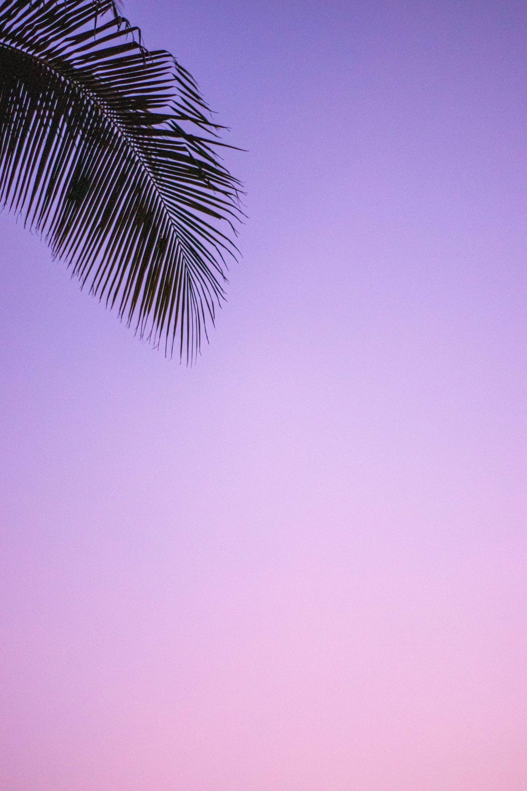 Tropical iPhone Wallpaper