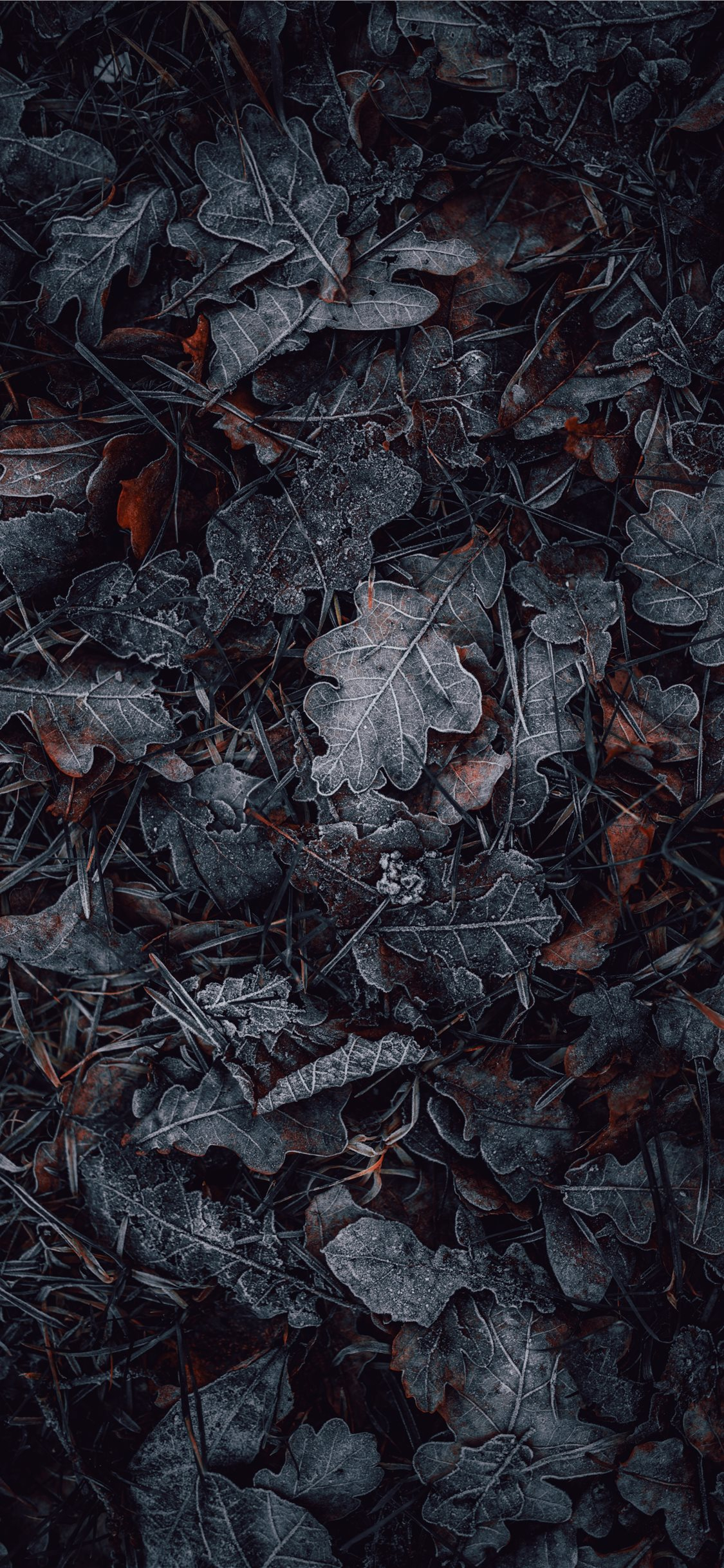 macro photography of gray and brown leaves iphone x wallpaper ilikewallpaper
