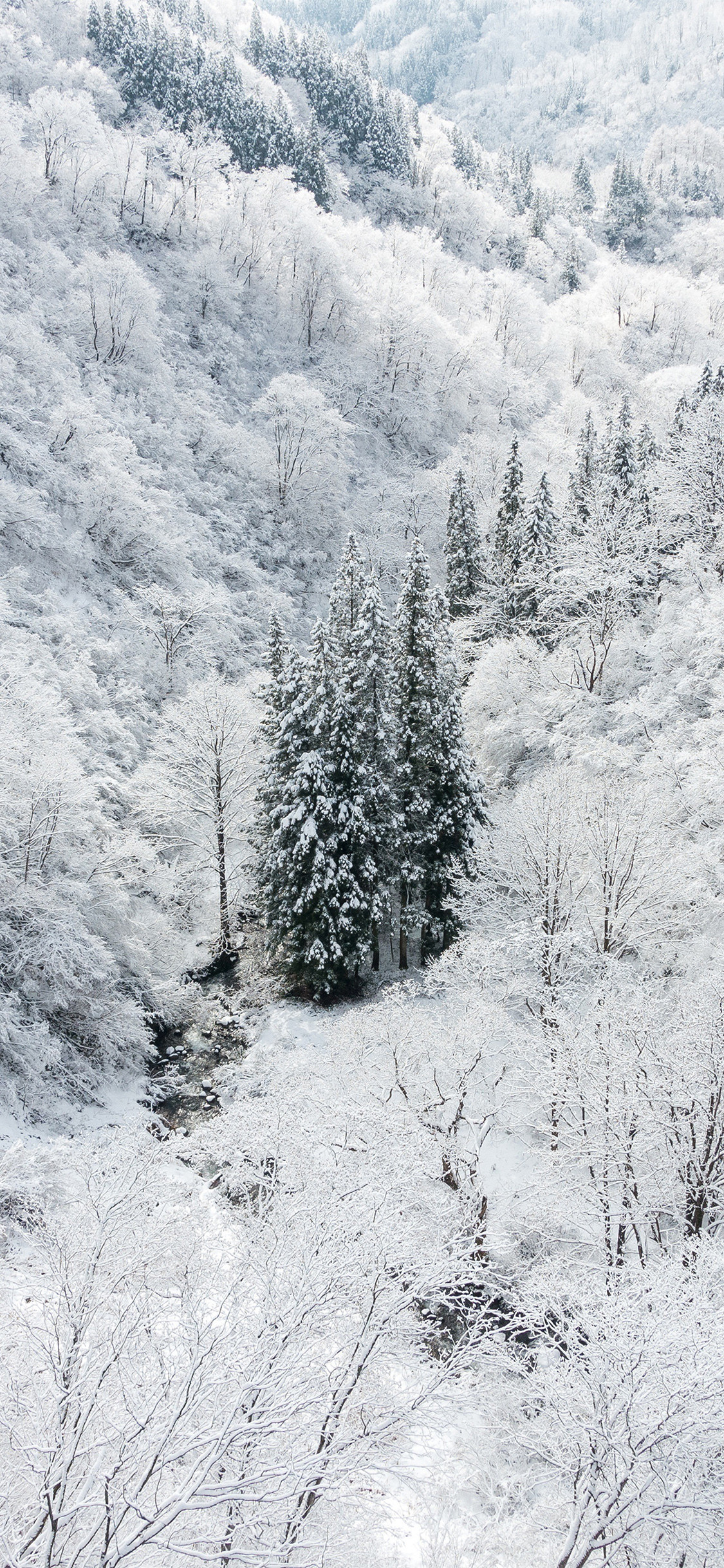 papers ni66 winter white snow wood forest mountain 41 iphone wallpaper