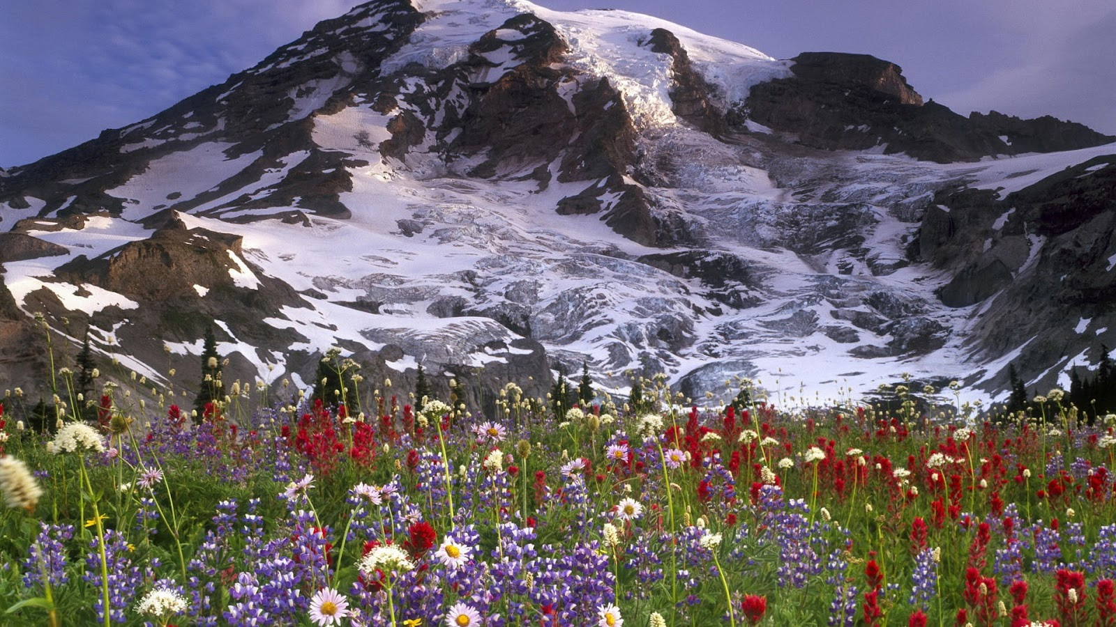 flowers and ice mountains full hd nature wallpaper for laptop