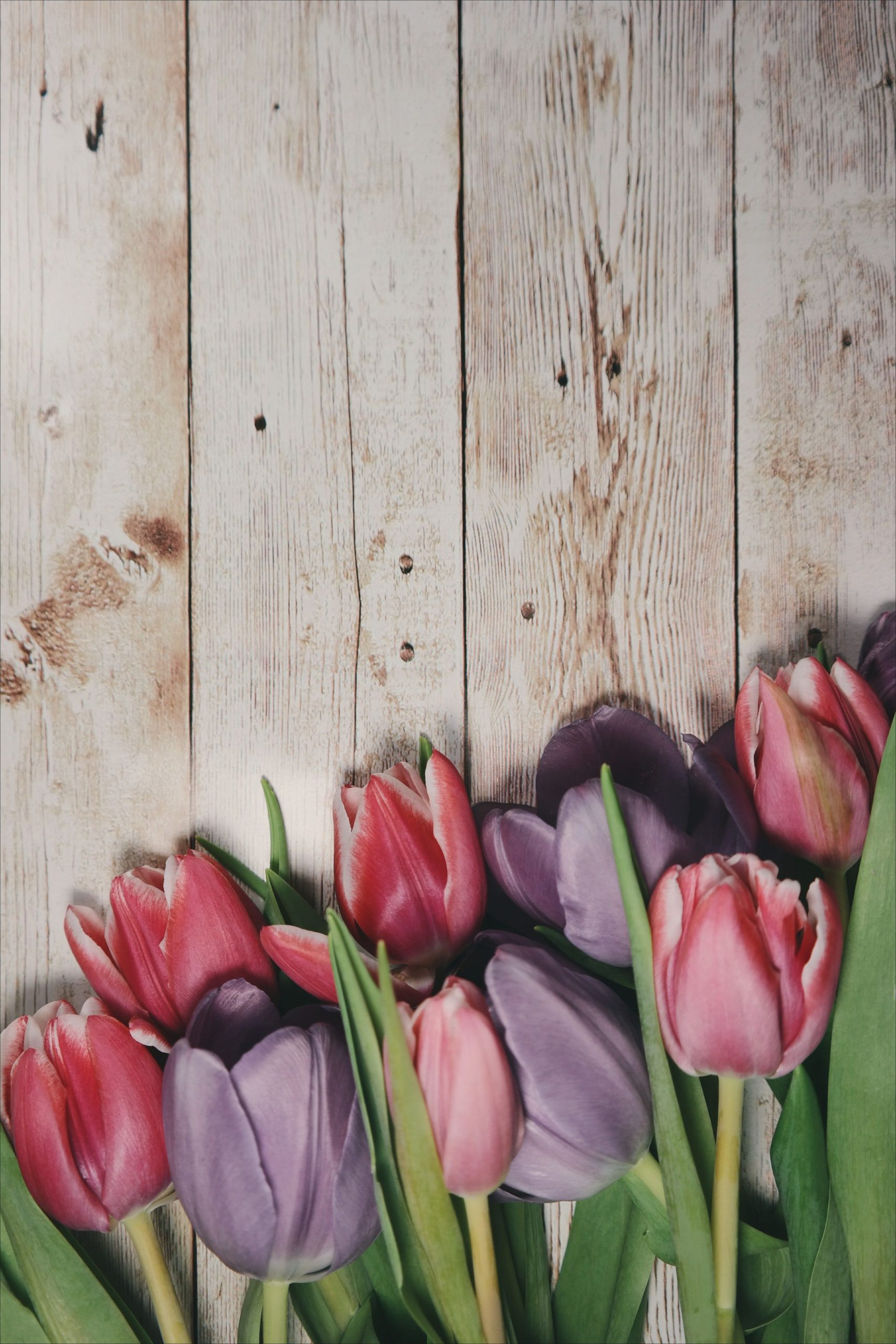 8d622a pastel tulips wallpaper iphone vintage iphone wallpaper tulips