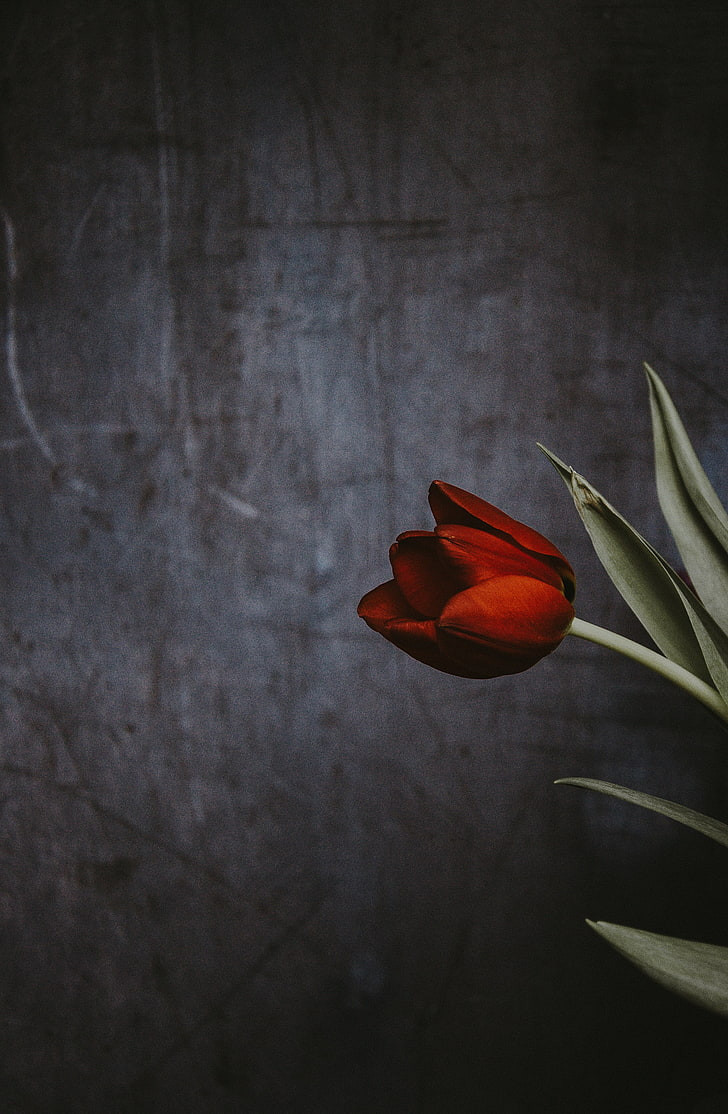 tulip flower wall wallpaper preview
