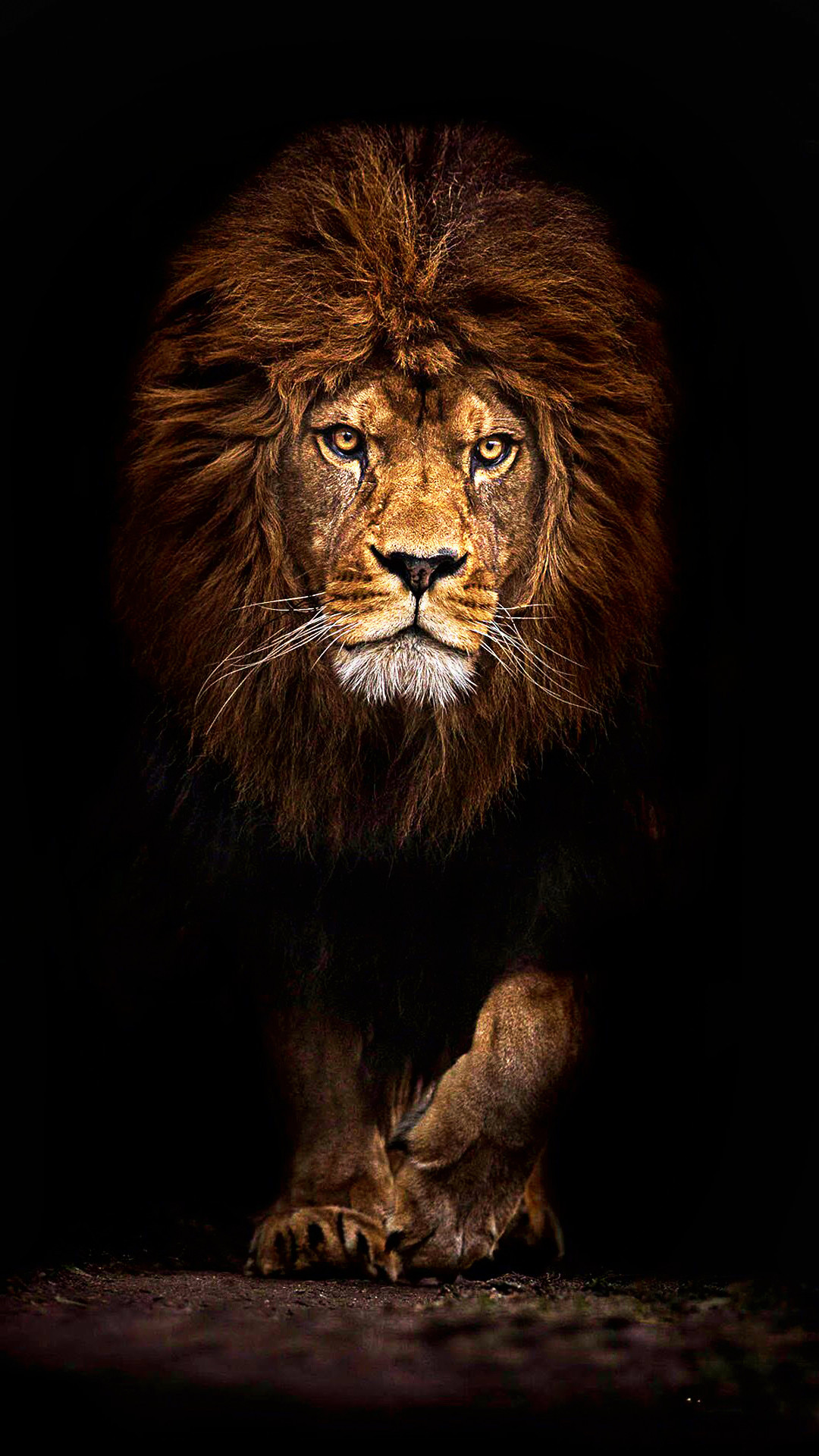 wxxh cool lion wallpapers for iphone ultra hd 4k