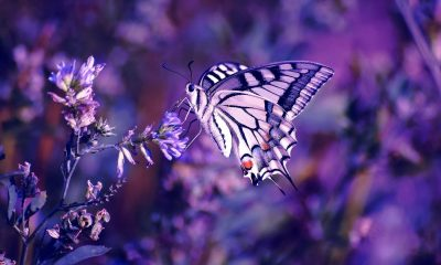 Wallpaper butterfly Backgrounds Latest Wallpapers butterflies Posted by Ryan anderson